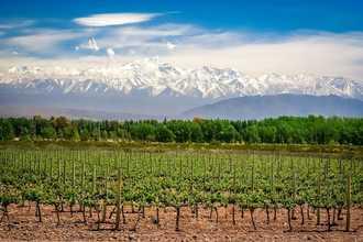 Banner high altitude vineyard
