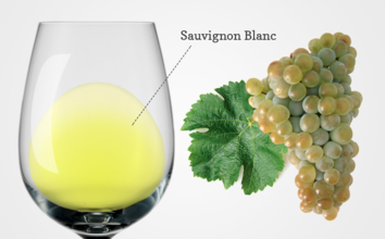 Decorative image for the story, Sauvignon Blanc